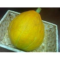 【プロ注目食材】 生で食べれる カボチャ 「コリンキー」1kg  兵庫県産