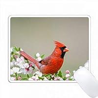北アメリカ、イリノイ州、マリオン、春のCrabappleの木の枢機卿。 PC Mouse Pad パソコン マウスパッド