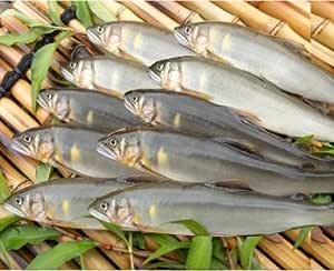新潟県魚野川産 天然鮎(-60.0℃急速冷凍) (10匹 3L 125.0g以上)