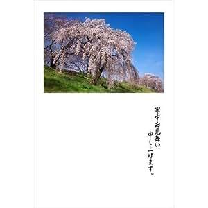 【季節の挨拶・寒中見舞いポストカードAIR】「寒中お見舞い申し上げます。」桜の咲く土手はがき・葉書・ハガキpostcard-photo by 絶景.com