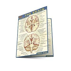 Quick Study The Brain