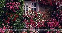 種子パッケージ: 24色のペチュニアの種、チャーミングペチュニアの花の種、ペチュニア鉢植えの種子、盆栽のバルコニーの花 - 100個/袋