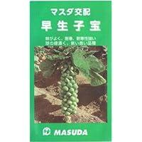 【種子】芽キャベツ 早生子宝 1.5ml