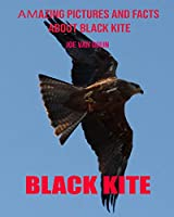 Black kite: Amazing Pictures and Facts About Black kite