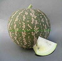 Bonsai Watermelon Fruit Snow Heirloom Vegetable 30 pcs/Pack: 4