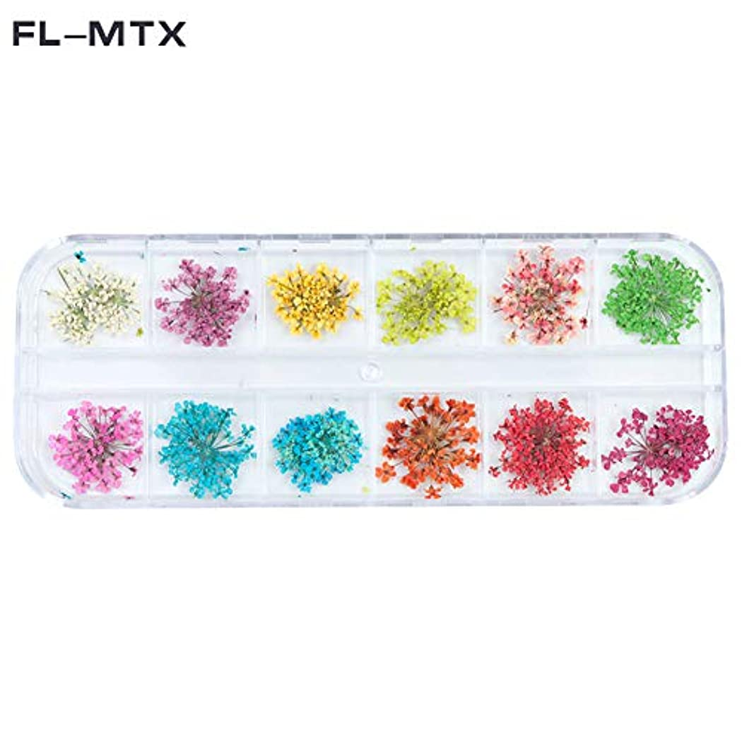 コンパイル多様体貴重な1パックのネイルジュエリードライフラワーdiyクラフト(fl-mtx)の3dフラワーネイル装飾用ドライネイル用品の12色違い