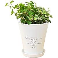 観葉植物 アイビー(ヘデラ)3種ブリキポット寄せ植え