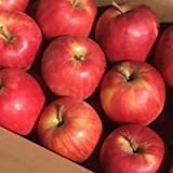 青森県産 訳あり りんご約5kg 津軽(つがる) 通常梱包