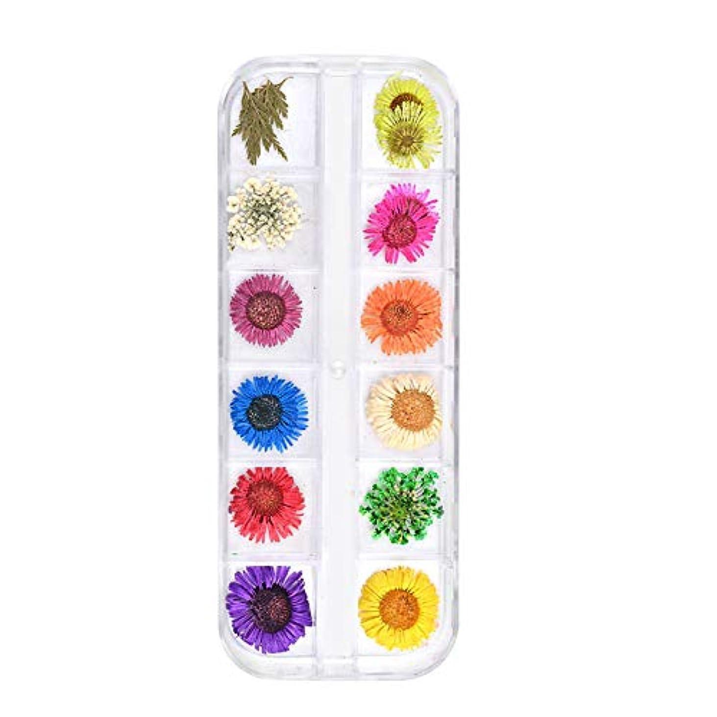 うっかり模索容赦ない乾燥した花のネイルステッカードライフラワーを乾燥12色の花のネイルデコレーション自然リアルな3Dネイルステッカーネイル用品デイジーBセクション
