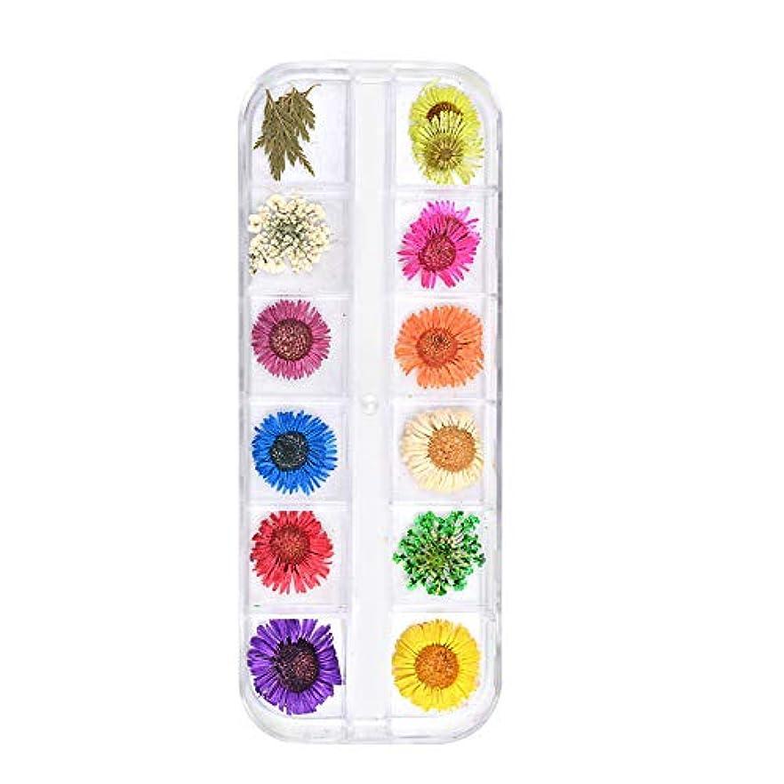 ブルジョン西ダウンタウン乾燥した花のネイルステッカードライフラワーを乾燥12色の花のネイルデコレーション自然リアルな3Dネイルステッカーネイル用品デイジーBセクション