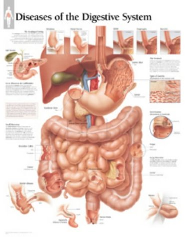 Download Diseases Of The Digestive System, Laminated Chart 193063353X