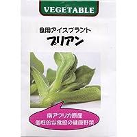 食用アイスプラントの種 2袋セット(人気沸騰中の野菜)*[春・秋まき野菜タネ]