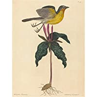 Mark Catesby English Yellow Breasted Chat Zoology Canvas Print