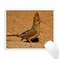 女性、地上の北部枢機卿、米国アリゾナ州、Saguaro NP PC Mouse Pad パソコン マウスパッド