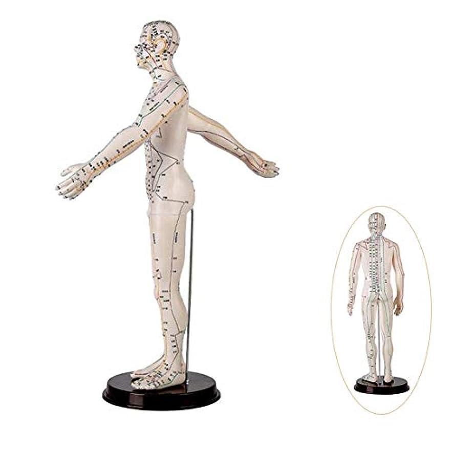 文言限りオゾン人間の鍼モデル男性モデルメリディアン、研修教育コレクタブル装飾スケルトン彫像のための医療援助、50センチメートル