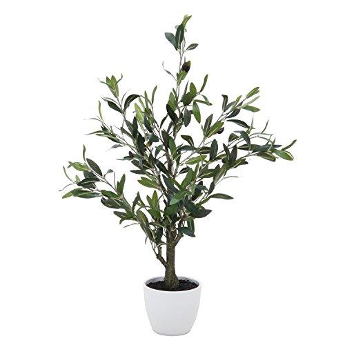 不二貿易 観葉植物 オリーブ 高さ82cm グリーン 52689