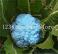 50 Pcs Broccoli Bonsai Vegetable Plant Non-GMO Heirloom Vegetable Potted Plant for Home Garden 95%+ Germination: 17