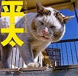 平太―なにわのぶちゃいどる猫 画像