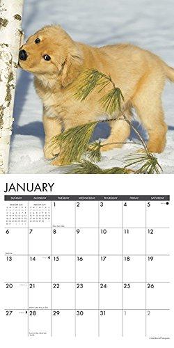『Just Golden Puppies 2019 Calendar』の2枚目の画像