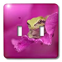 3drose LSP 11348_ 2A Green Tree Frog Hides in a flower double切り替えスイッチ
