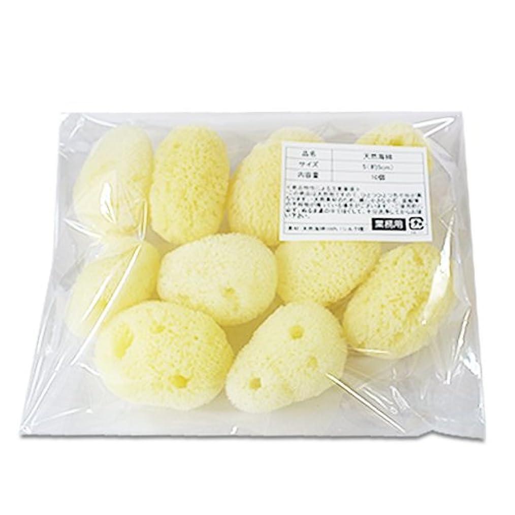 泥窒素オーブン【業務用】天然海綿シルク サイズ5(約5cm)1袋10個入り│プロ仕様 吸収力?耐久力抜群 サニタリー