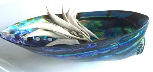 『KM Company 《浄化力UP》最高級のニュージーランド産 アバロンシェル 浄化皿《両面磨き》 ホワイトセージ さざれ石 パワーストーン 浄化用 香皿』の1枚目の画像