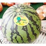 沖縄県産フルーツ 今帰仁スイカMサイズ(約2.5kg)3玉
