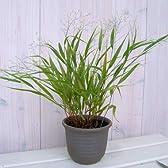 青風知草と山野草鉢の植え込みセット