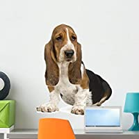 Wallmonkeys Basset Hound Wall Decal Peel and Stick Graphic (24 in H x 24 in W) WM164489 [並行輸入品]