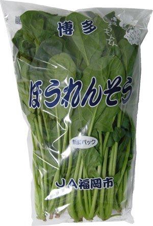 九州産 ほうれん草(ほうれんそう・ホウレンソウ・ホウレン草) 抜群の栄養価!  九州の安心・安全な野菜! 【九州・福岡・熊本・長崎】