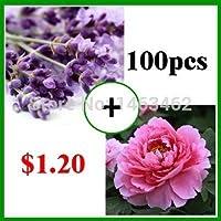 昇進!80ピース非常に香りのよいフレンチプロヴァンスラベンダーの種と20ピースバニラフラワーシードツリー牡丹種子