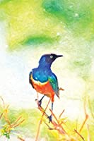 Notes: Colorful Superb Starling Bird In Tanzania Africa - Blank College-Ruled Lined Notebook (Student Animal Journals for Writing Journaling & Note-taking)