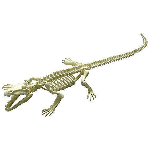 ポーズスケルトン 爬虫類両生類No.201 クロコダイル