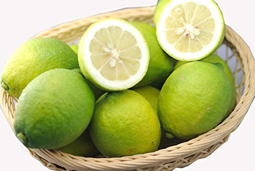 【訳あり】減農薬 愛媛産 レモン 10kg 加工用 国産 産地直送 ore