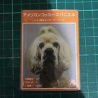犬種図鑑カード No.032 アメリカンコッカースパニエル