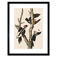 Audubon American Ivory Woodpecker Framed Wall Art Print アメリカ人木材壁