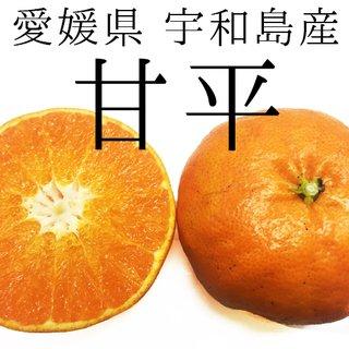 愛媛県宇和島産 【甘平(かんぺい)】大きさミックス約4.5kg