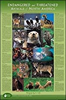 Endangered And Threatened Animals - Of North America Poster - 91.5x61cm
