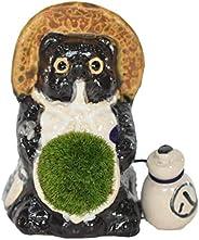 盆栽妙 信楽たぬきの苔盆栽 パパたぬき 単体 プレゼント お祝い ギフト 人気