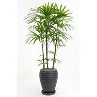 棕櫚竹(シュロチク)(黒陶器)