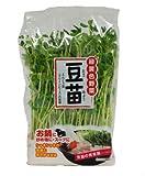 九州産 豆苗(とうみょう) とても栄養価の高い野菜! 1袋 九州の安心・安全な野菜! 【九州・福岡産】