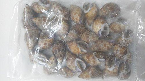 冷凍 生バイ貝殻付き2kg(100〜160個)ばい貝 加熱してお召し上がりください。