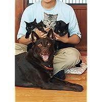 【Amazon.co.jp 限定】タイピー日記「犬1匹、猫4匹との佐渡島暮らし」 単行本(ソフトカバー)