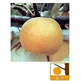 ナシ(梨):ホウスイ(豊水)4~5号ポット[赤梨系統の代表的な品種][苗木] ノーブランド品