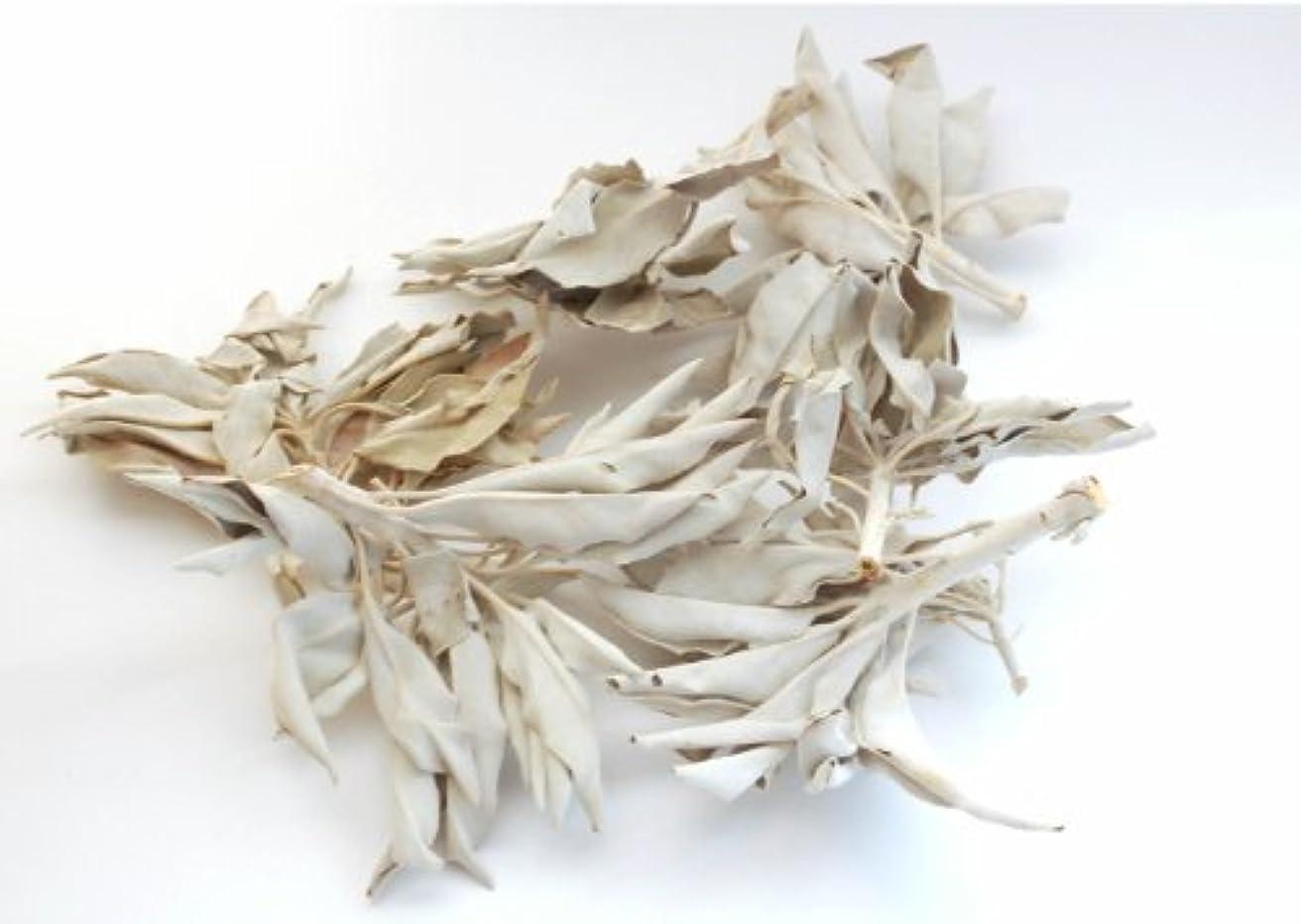 対立金額うがいセドナのヒーラーの推奨品、ワイルド(野生)ホワイトセージ(無農薬栽培)クラスター45g