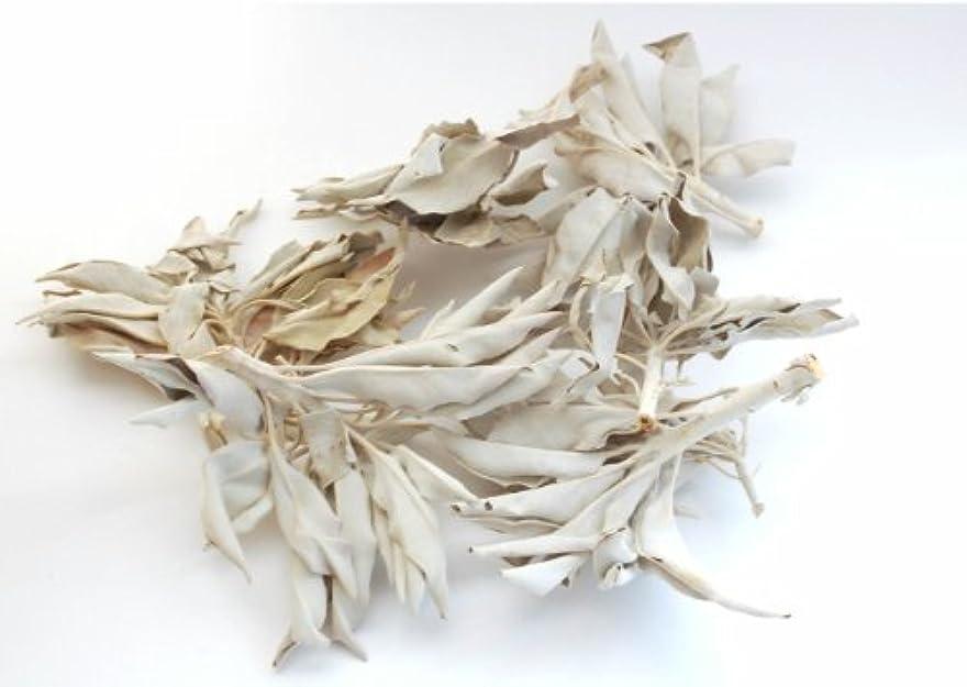 収束する民族主義だらしないセドナのヒーラーの推奨品、ワイルド(野生)ホワイトセージ(無農薬栽培)クラスター45g
