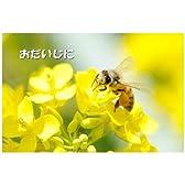 ポストカードメッセージ入り「おだいじに」絵葉書ハガキpostcard-photo by 大石智久