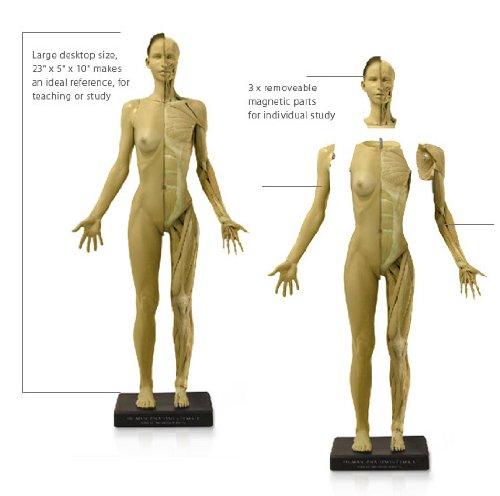 アナトミー(人体模型)フィギュア 女性Ver,1