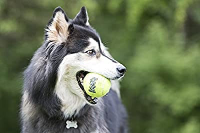 Kong AirDog Squeaker Balls Medium Dog Toy