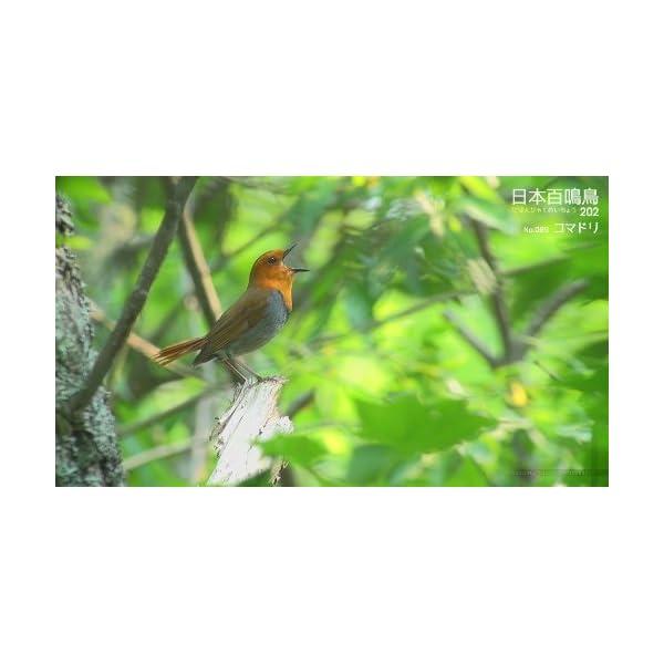 シンフォレストBlu-ray 日本百鳴鳥 2...の紹介画像17
